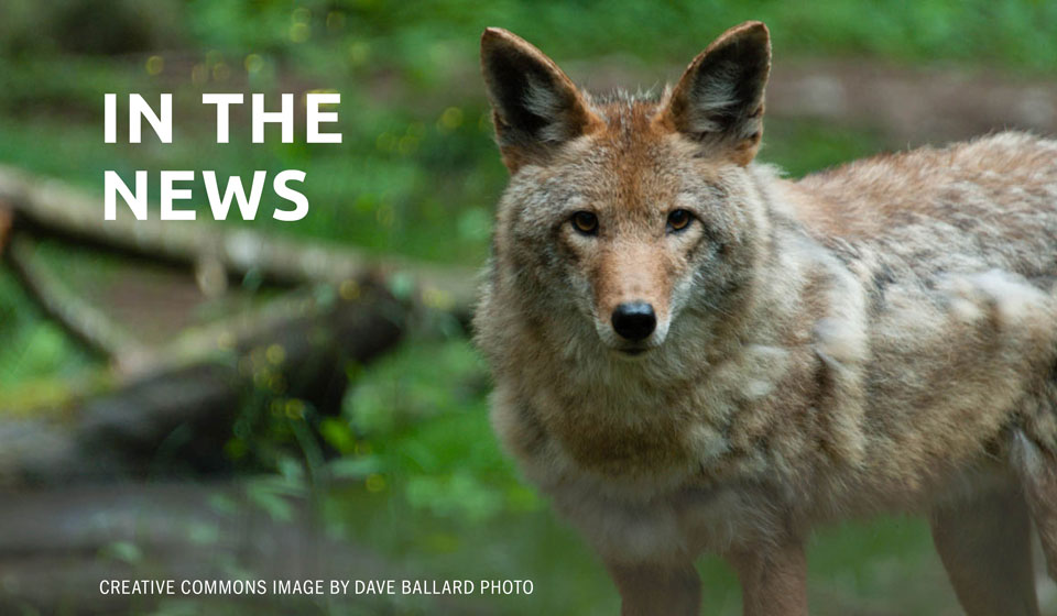Don't kill predators, protect and grow habitat