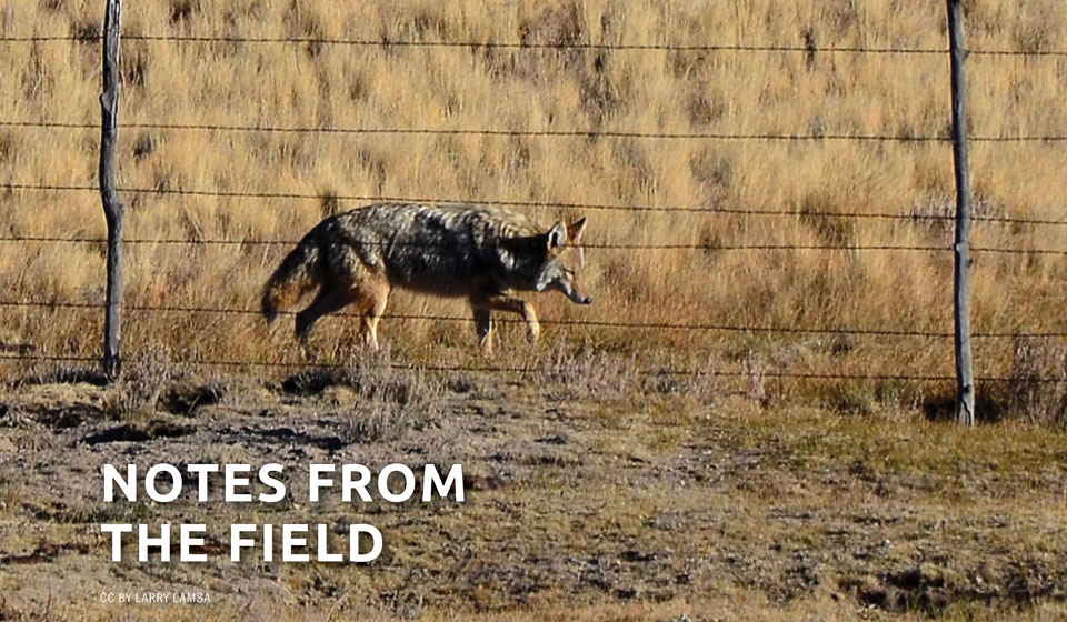 Coyote America: Author Dan Flores Speaks about North America's Native Song Dog