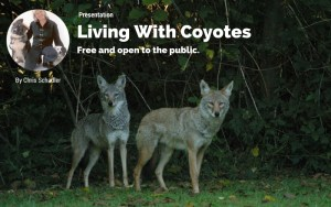 Norton, VT: Nature Walk: Living with Coyotes @ Quimby Country | Averill | Vermont | United States