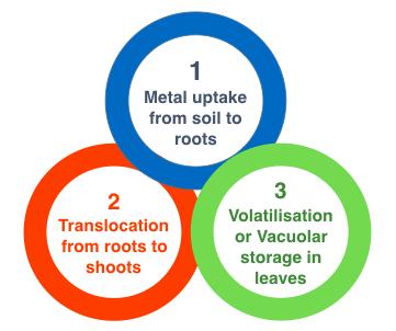 General steps in Phytoremediation of metal bioremediation
