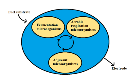Three types of interdependent microorganisms cooperating in fuel degradation and electron transfer for electricity generation (Rinaldi et al. 2008)