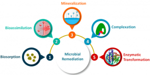 Common microbial processes involved in Bioremediation