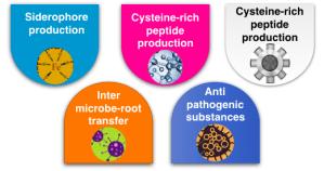 Mechanisms of plant growth promoting rhizobacteria advantageous in Phytoremediation