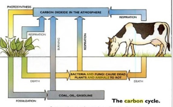 The Carbon Cycle (Oxlade, 2002) in a GHG protocol