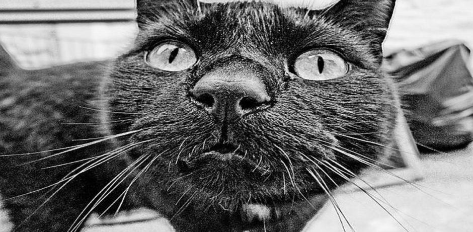 01 Black-cat-wallpapers-1