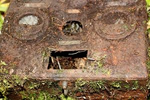 old japanese electrical box in palau
