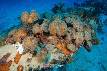 Sea Anemones on the wing tip of a B24 WWII aircraft wreck we documented during Solomons MIA Search - Project Recover and BentProp Project are committed to bringing the MIA home. Photos by Harry Parker Photography.com