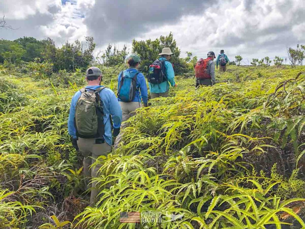 Adam and the Project Recover Team hike through the dreaded Ito fern in Palau. Photos by Harry Parker Photography
