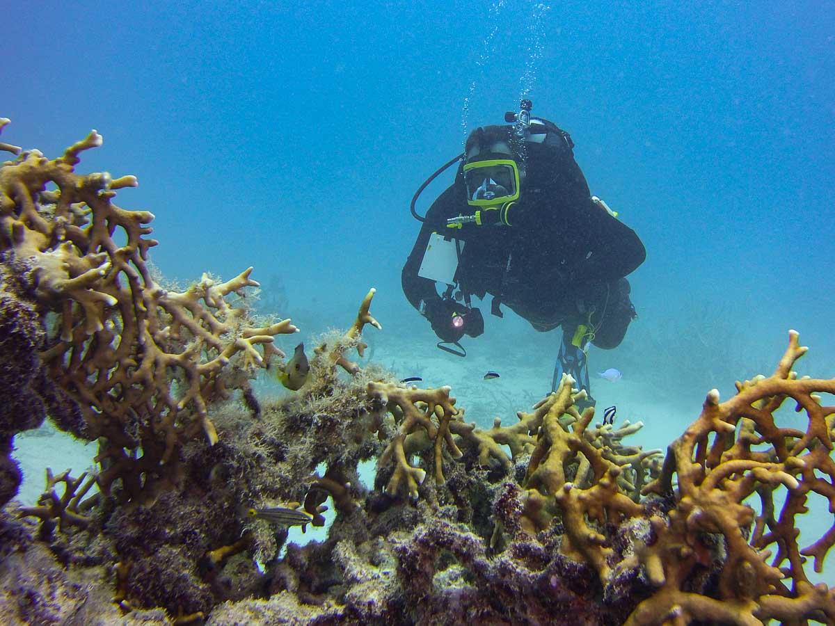 Dr. Colin Colbourn scuba diving