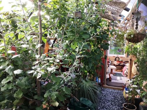 Polytunnel with Established Fruit Trees Jindalee, Hillside, Quarff, Shetland