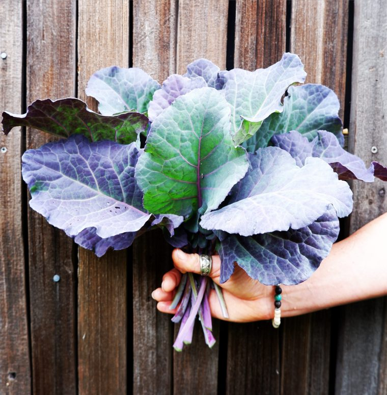 Purple Tree Collard Greens