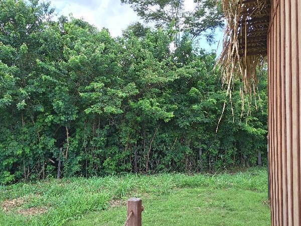 Floresta Amazônica PVH