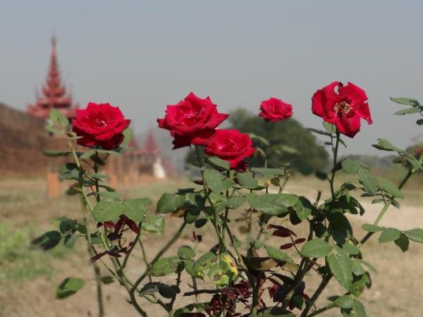 Royal Palace Mandalay Myanmar