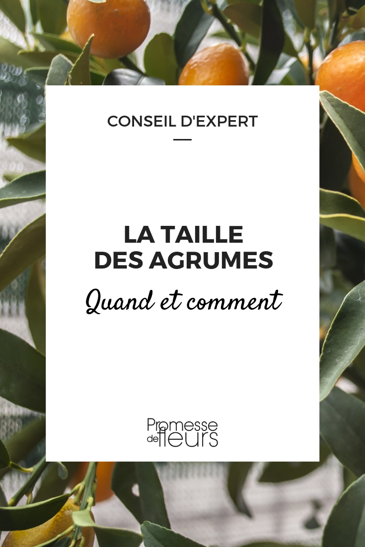 Tailler Les Agrumes Quand Et Comment Nos Conseils