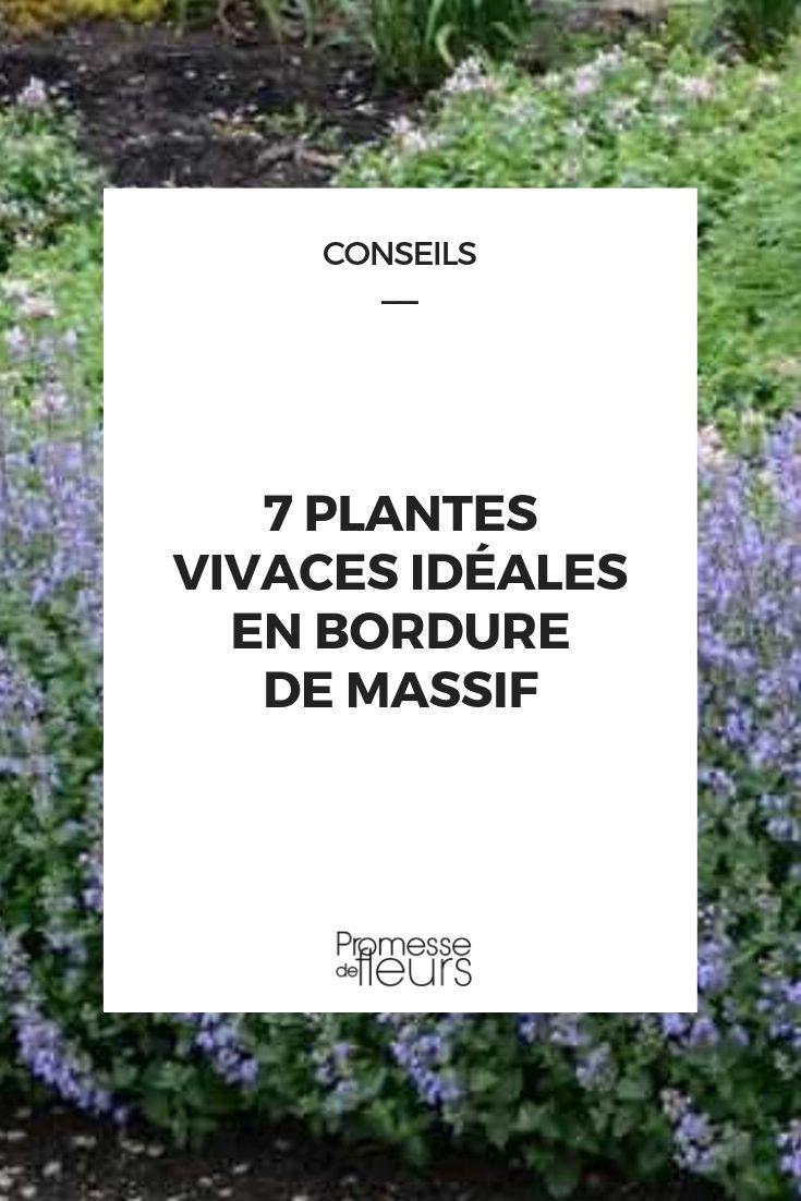 7 plantes vivaces ideales en bordure de