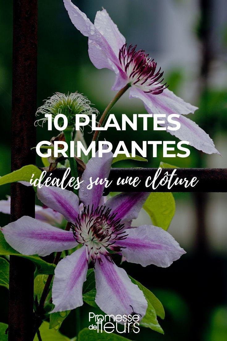 10 plantes grimpantes ideales pour