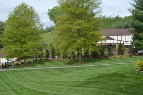 Striped Lawn