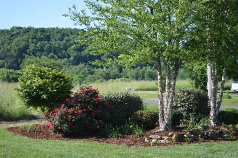 Landscaped Area