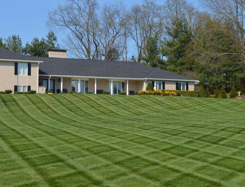 Lawn Maintenance Photos