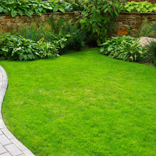 choosing lawn care company in kingsport