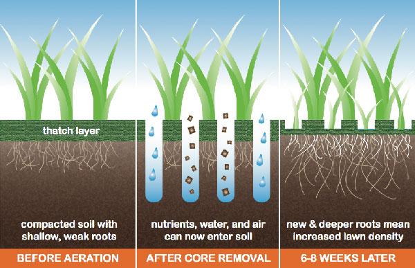 Lawn Over-Seeding & Aeration Kingsport, Johnson City, Bristol and Greeneville.