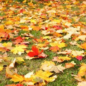 fall watering guide