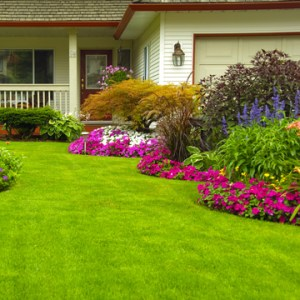 get a great looking yard next spring