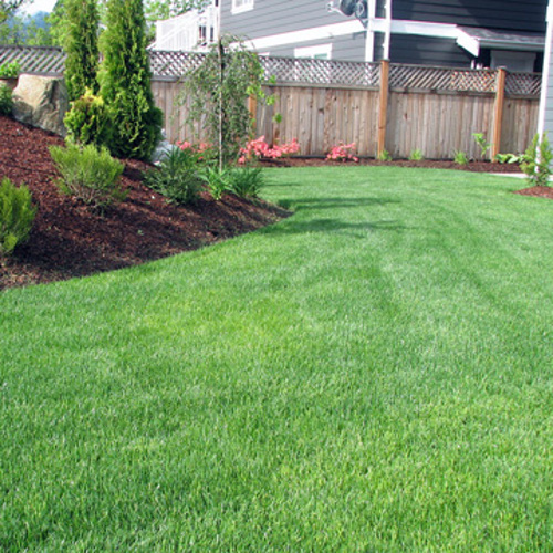 grow thick green grass