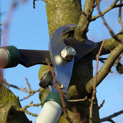 Tree Pruning and Maintenance Kingsport TN