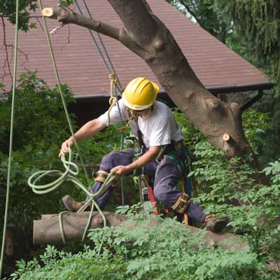 Tree Removal Kingsport