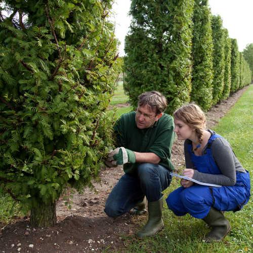 Arborist Consulting Companies