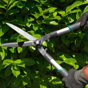 pruning and maintenance