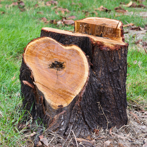 removing tree stumps
