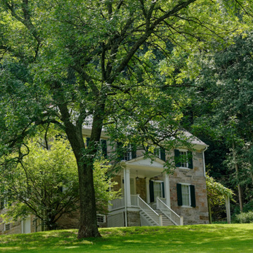 what causes tree rot