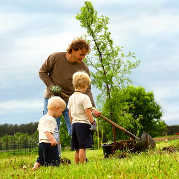 plant a tree in fall