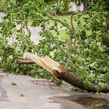fallen tree limbs cause damage