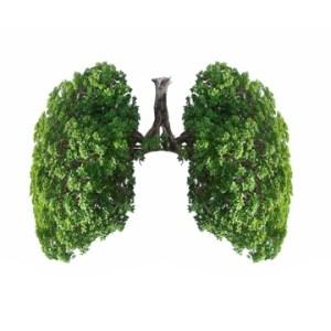 evaluate tree health