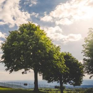 keep old trees beautiful