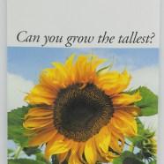 Stock Packet – Sunflower