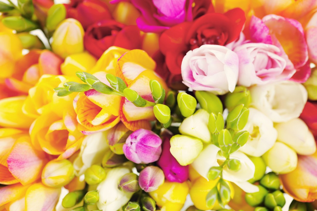 9. Freesia flowers