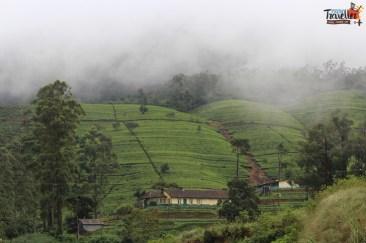 Train Ride from Kandy to Nuwara Eliya - Tea Estate view 2