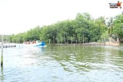 sri lanka tour itinerary - Madu River Boat Ride through Mangroves - View 7