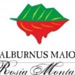 Alburnus Maior