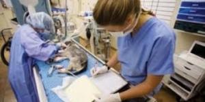 sterilizare-gratuita