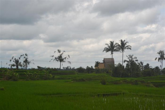 Land for sale in Tabanan Bali 35 Ares in Tabanan