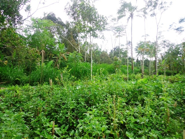 Land in Ubud Bali For sale 1,700 sqm in Ubud Tegalalang