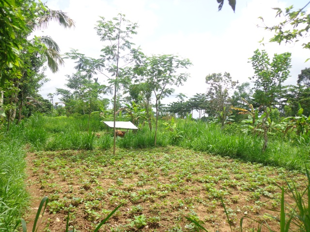 Land for sale in Ubud Bali 81 Ares in Ubud Tegalalang