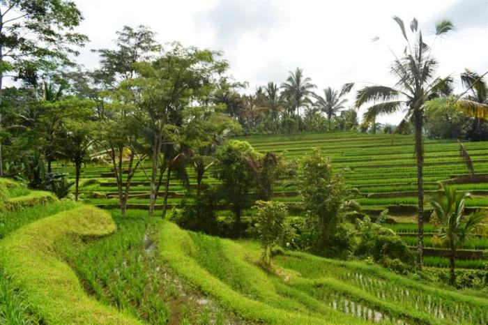 Land for sale in Tabanan rice fields view by the river  in Tabanan  Bali