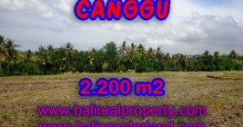 Fantastic Property in Bali for sale, land for sale in Northern Canggu – TJCG128
