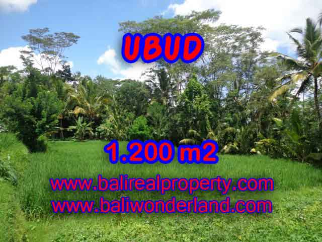 Land in Ubud for sale, Attractive view in Ubud Payangan Bali – TJUB404